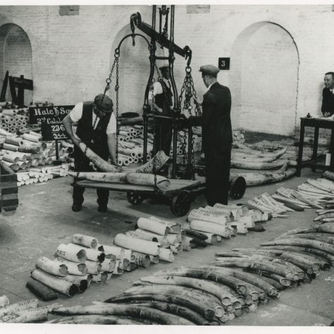 Weighing ivory St Katherines Dock 1930s | Museum in Docklands Project