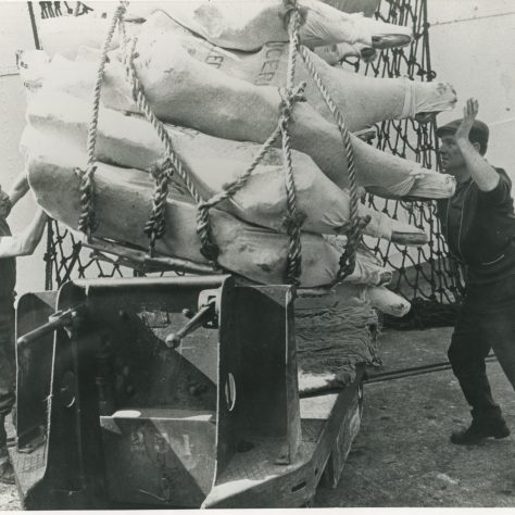 Meat carcases unloaded at Royal Victoria Docks | Museum in Docklands project